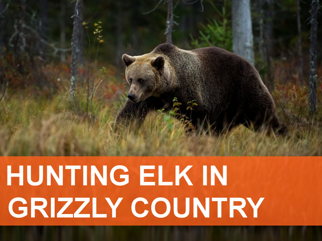 Grizzly Article Block_1120x840